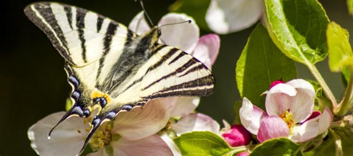 İda'nın Kelebekleri -47