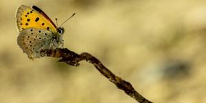 İda'nın Kelebekleri -50