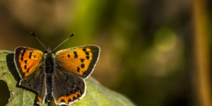 İda'nın Kelebekleri -73