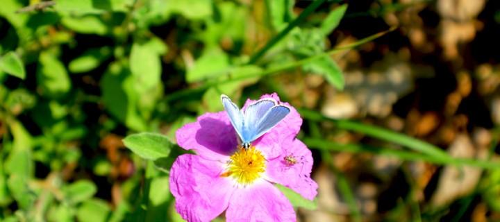 İda'nın Kelebekleri -66