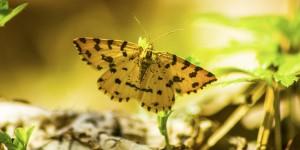İda'nın Kelebekleri -71
