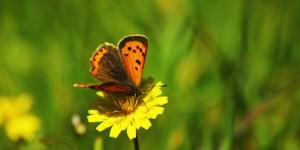 İda'nın Kelebekleri -72