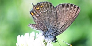 İda'nın Kelebekleri -75