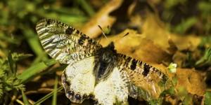 İda'nın Kelebekleri -52