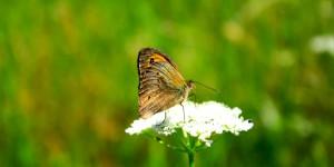 İda'nın Kelebekleri -54
