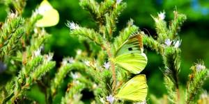 İda'nın Kelebekleri -58