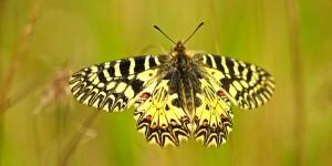 İda'nın Kelebekleri -63