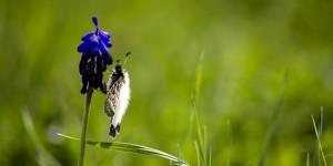 İda'nın Kelebekleri -68
