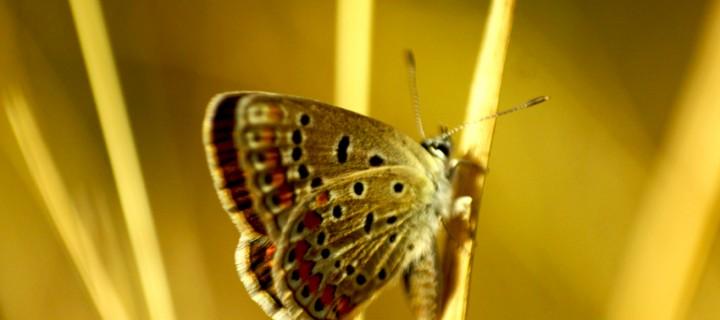 İda'nın Kelebekleri -65