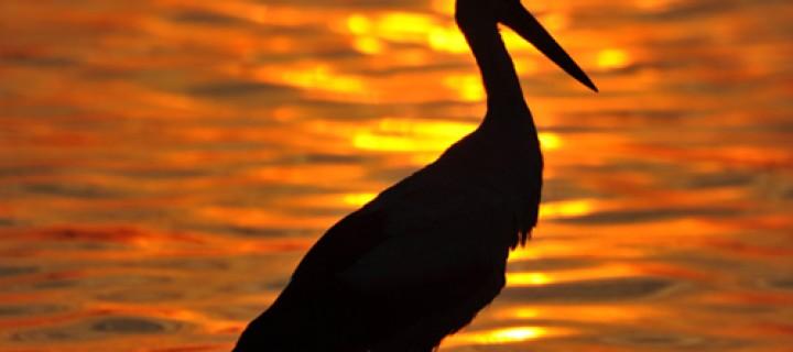 Apolyont Gölü'nün Gerçek Sahipleri; Leylekler -48