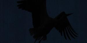 Apolyont Gölü'nün Gerçek Sahipleri; Leylekler -50