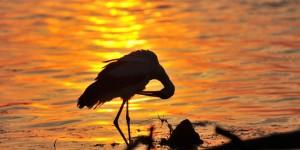 Apolyont Gölü'nün Gerçek Sahipleri; Leylekler -23