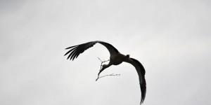 Apolyont Gölü'nün Gerçek Sahipleri; Leylekler -40