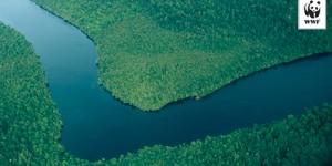 Tazmanya'nın Dünya Mirası Listesi'deki Ormanlarına Destek Olun