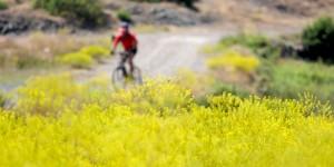 Cumhuriyet Yolu Dağ Bisikleti Parkuru İlgilisini Bekliyor