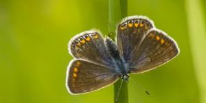 İda'nın Kelebekleri -77