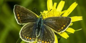 İda'nın Kelebekleri -78