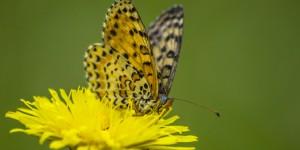 İda'nın Kelebekleri -98
