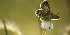 İda'nın Kelebekleri -99