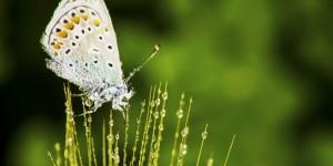 İda'nın Kelebekleri -103
