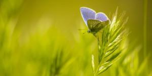 İda'nın Kelebekleri -81