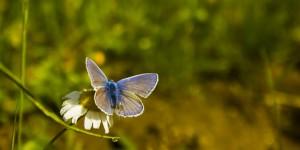 İda'nın Kelebekleri -83