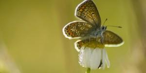 İda'nın Kelebekleri -84