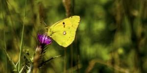 İda'nın Kelebekleri -93