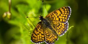 İda'nın Kelebekleri -95