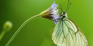 İda'nın Kelebekleri -129