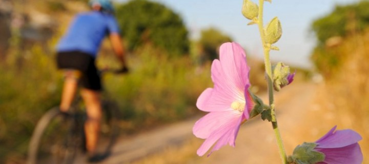 Apolyont'ta Bisiklet -50