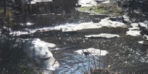Darıdere Baraja Kurban mı Edilecek?