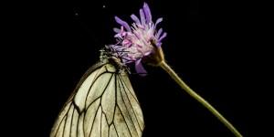 İda'nın Kelebekleri -133
