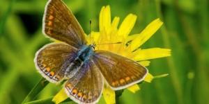 İda'nın Kelebekleri -131
