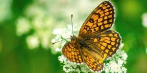 İda'nın Kelebekleri -132