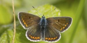 İda'nın Kelebekleri -106