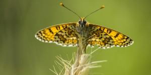 İda'nın Kelebekleri -107