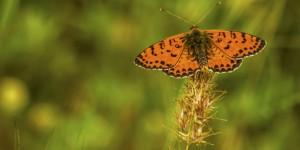İda'nın Kelebekleri -89