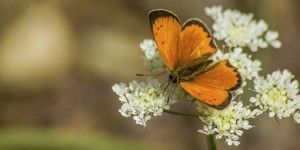 İda'nın Kelebekleri -128