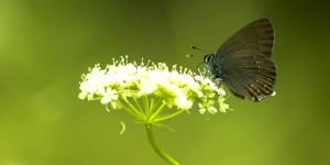 İda'nın Kelebekleri -115
