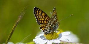 İda'nın Kelebekleri -117