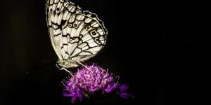 İda'nın Kelebekleri -120