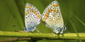 İda'nın Kelebekleri -123