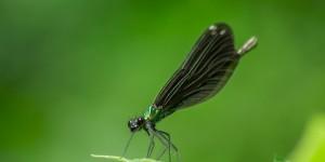 İda'nın Kelebekleri -108