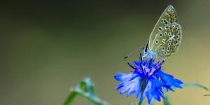İda'nın Kelebekleri -124