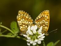 İda'nın Kelebekleri -125