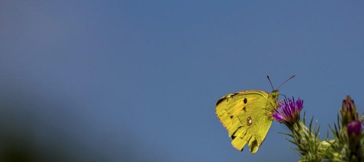 İda'nın Kelebekleri -126