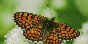İda'nın Kelebekleri -110