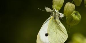 İda'nın Kelebekleri -112