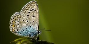İda'nın Kelebekleri -85